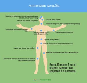 Анатомия ходьбы | Mani veselibas dati